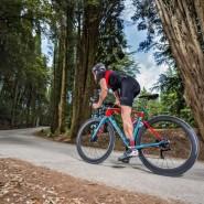 Bicicletas Modelos 2018 Wilier Carretera